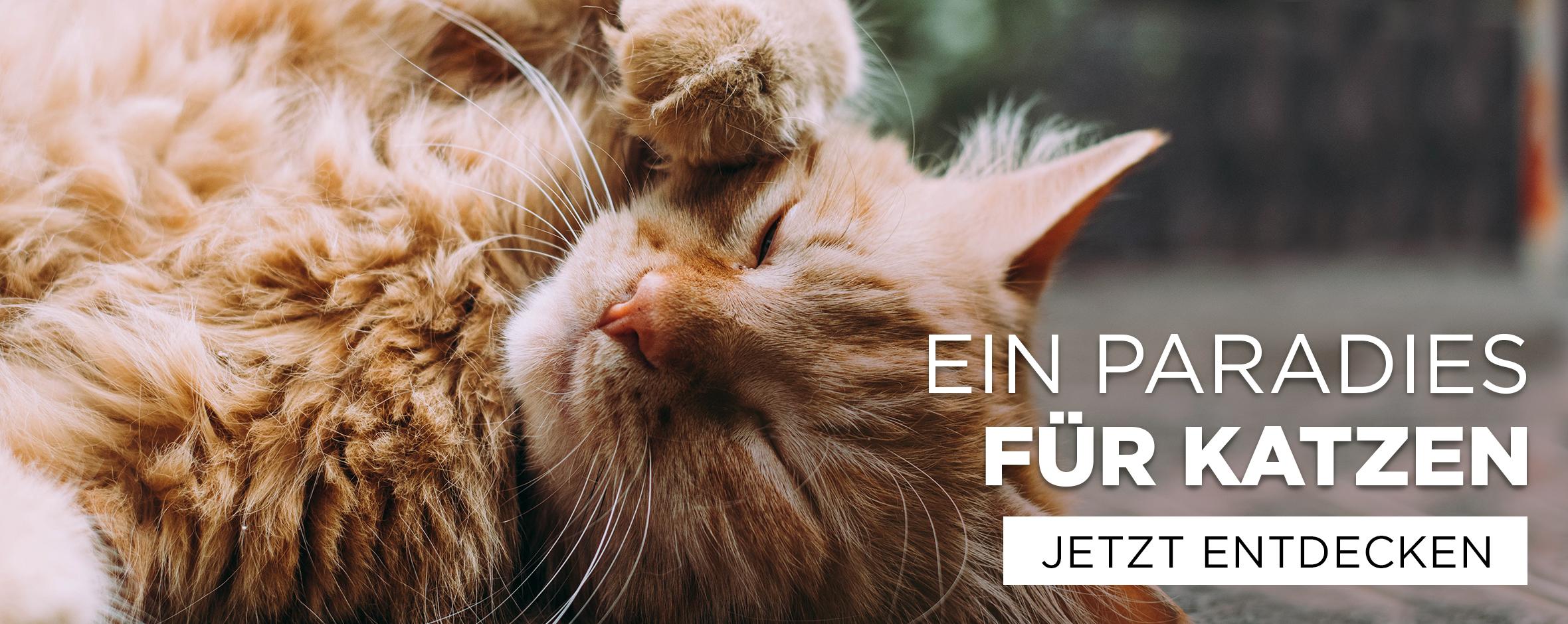 Katzenbedarf & Katzenzubehör
