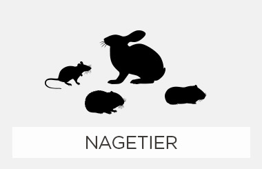 Nagetier