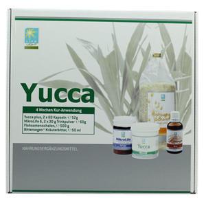 LL Yucca Kur 1 Monat