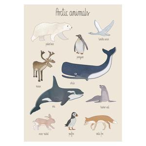 Sebra Poster Kinderzimmer Arctic Animals