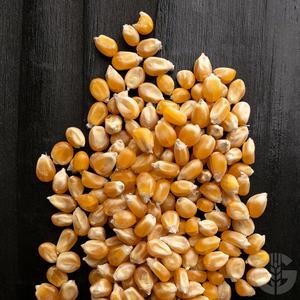 Popcorn Mais, BIO aus Österreich