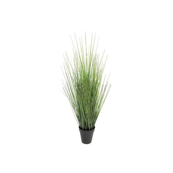 Multipack Gras im Topf 61cm - 6 Stück