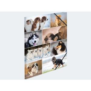 Sammelmappe A4 Hunde Pappe - 19211