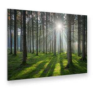 Sonniger Wald Alu-Verbund Art Print (42 x 29 cm)