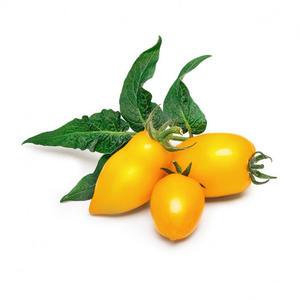 VÉRITABLE® gelbe mini Tomaten Bio