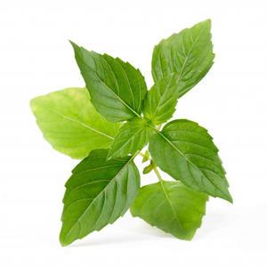 VÉRITABLE® Lingot Thai Basilikum Bio