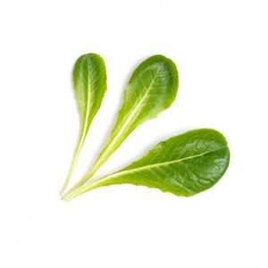 VÉRITABLE® Römer Salat Bio