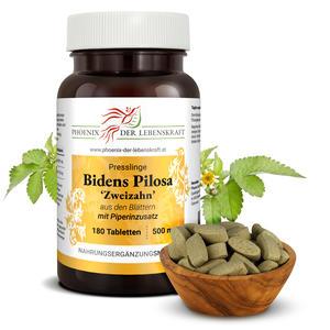 Bidens Pilosa (Behaarter Zweizahn) - Tabletten, 500 mg