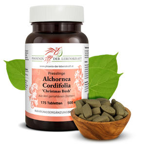 Alchornea Cordifolia (Christmas Bush) - Tabletten, 500 mg