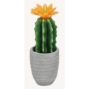 Kaktuskerze im Topf