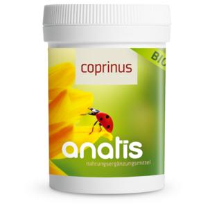 Coprinus Pilz BIO