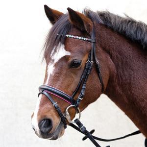 Trensenzaum Sparkling Hearts Pony