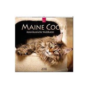 MAINE COON - Amerikanische Waldkatze / Kalender