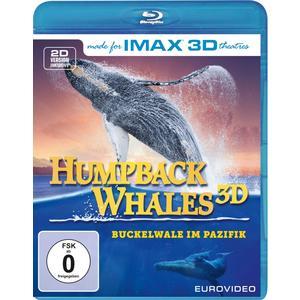 IMAX Buckelwale im Pazifik (4K UHD)#- Blu-Ray