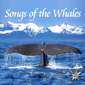 Nature Project - Songs Of The Whales - 1 CD