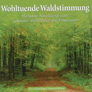 Various - Wohltuende Waldstimmung - 1 CD