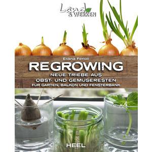 Regrowing – Neue Triebe aus Obst- und Gemüseresten
