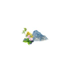 Sauna-Duftkonzentrat Alpenkräuter