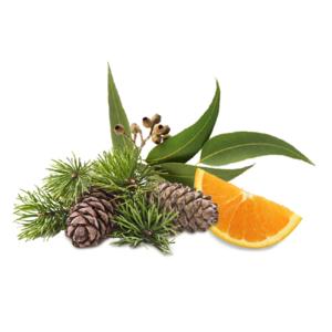 Sauna-Duftkonzentrat Zeder Euka Orange