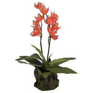 Lucky Reptile Orchidee lachsrot, groß ca. 40cm hoch