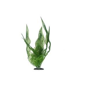 Hobby Aponogeton 25 cm