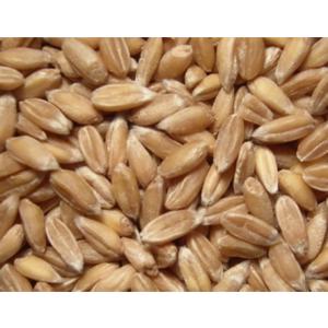 Bio Dinkel, ganzes Korn, DOPPELPACK 2 x 1 kg